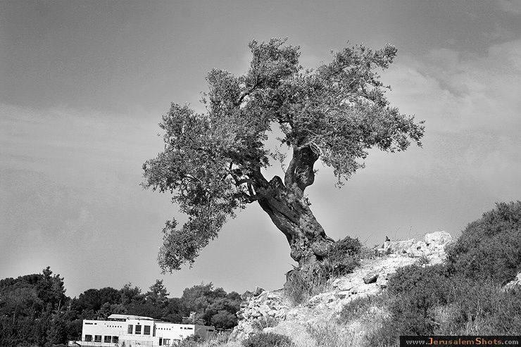 Jerusalem photographer romkri black and white nature