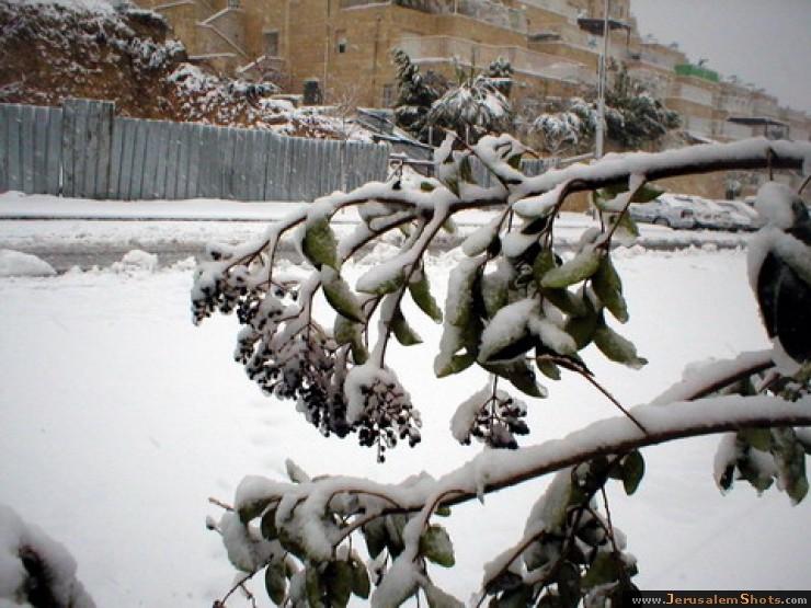 Дембицкий снег иерусалим в снегу