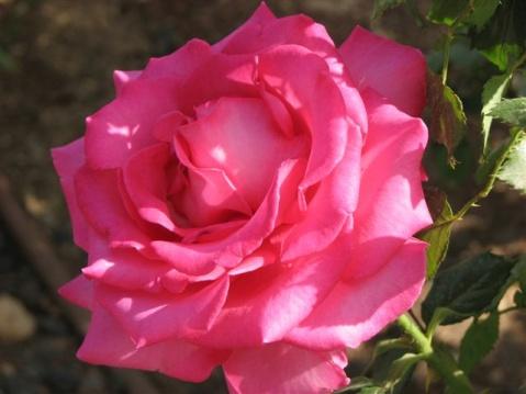 http://www.jerusalemshots.com/i/misc2/Rose-Park-20.jpg