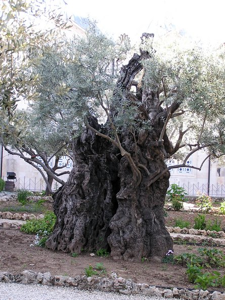 Domestic Vocation Searching For The Garden Of Gethsemane