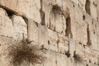 Wailing Wall - fragment