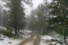 Snow in Jerusalem forest